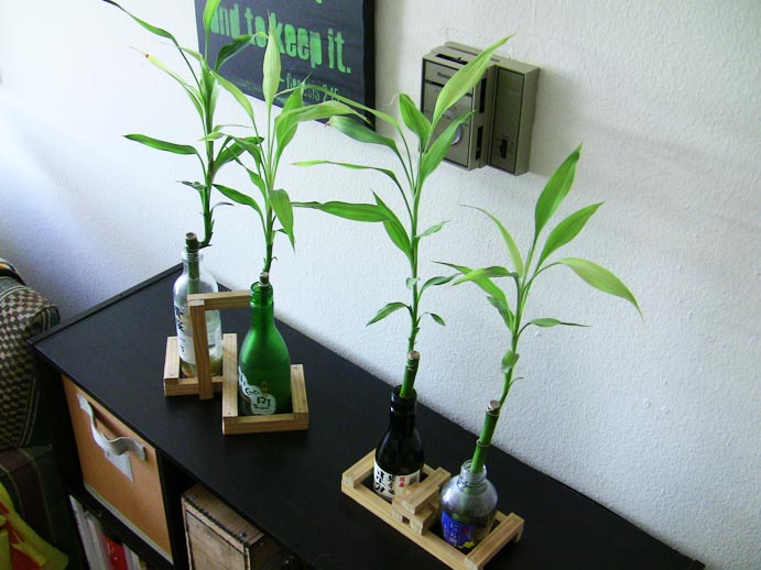 DIY Plant Wine Bottles