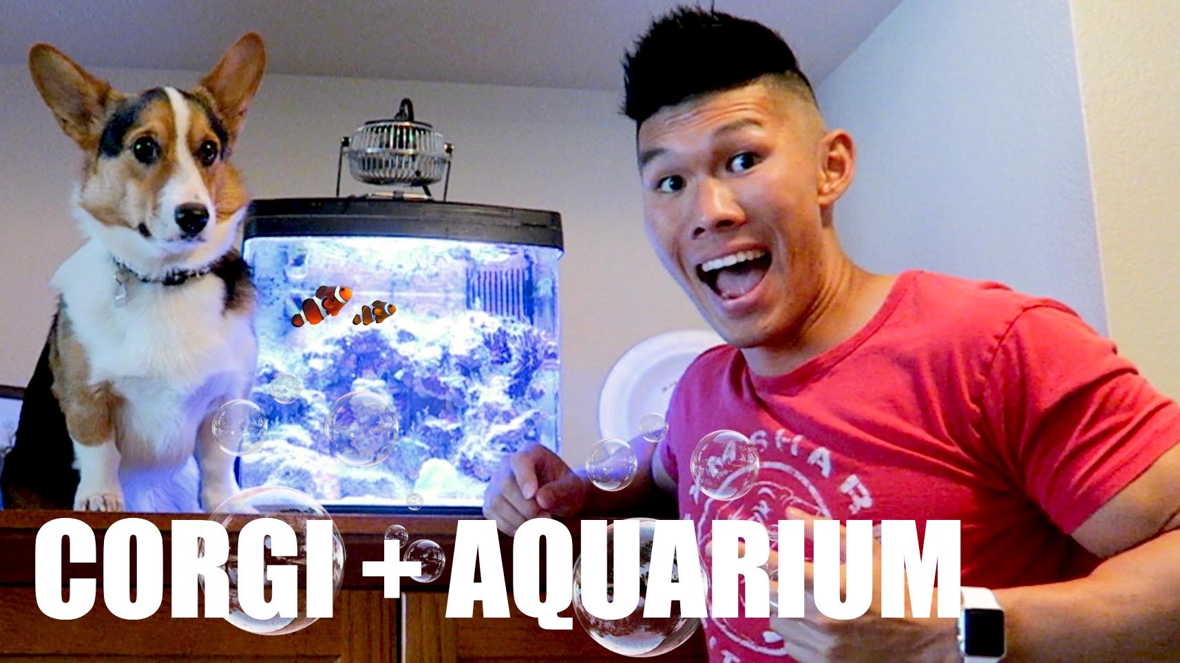Corgi's Nano Reef Aquarium