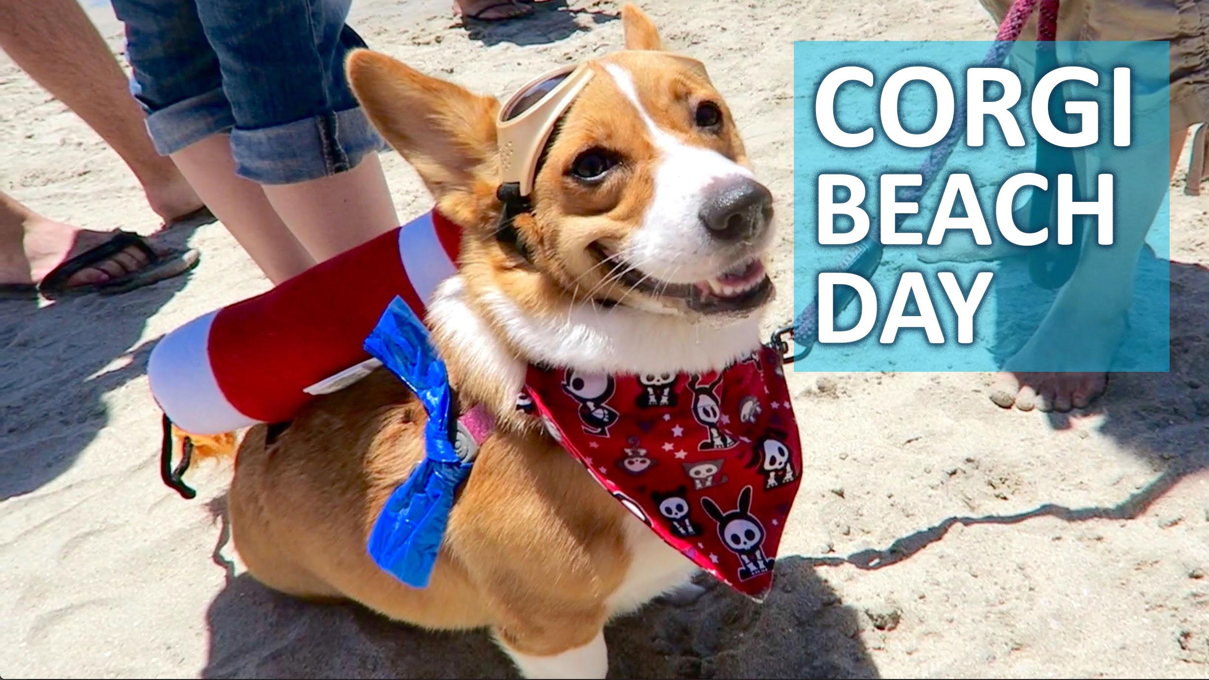 SoCal Corgi Beach Day