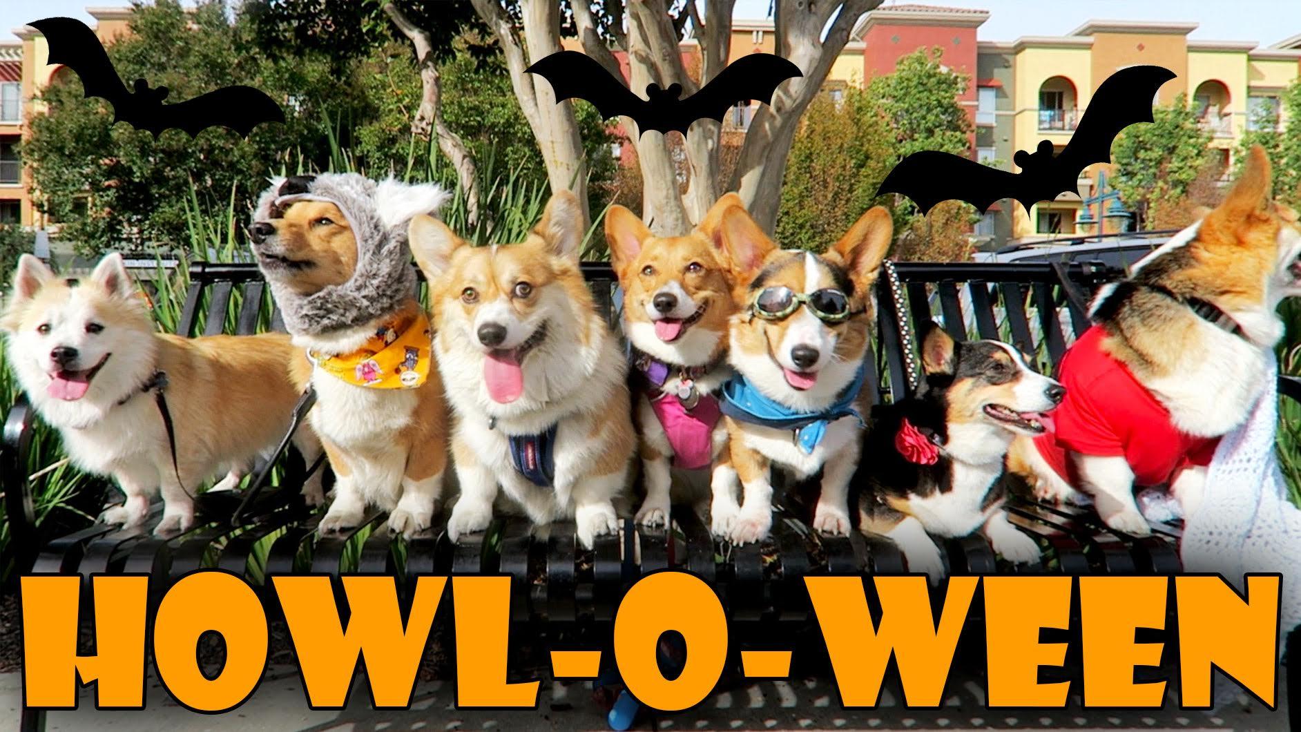 HALLOWEEN DOG COSTUME PARTY for CORGIS