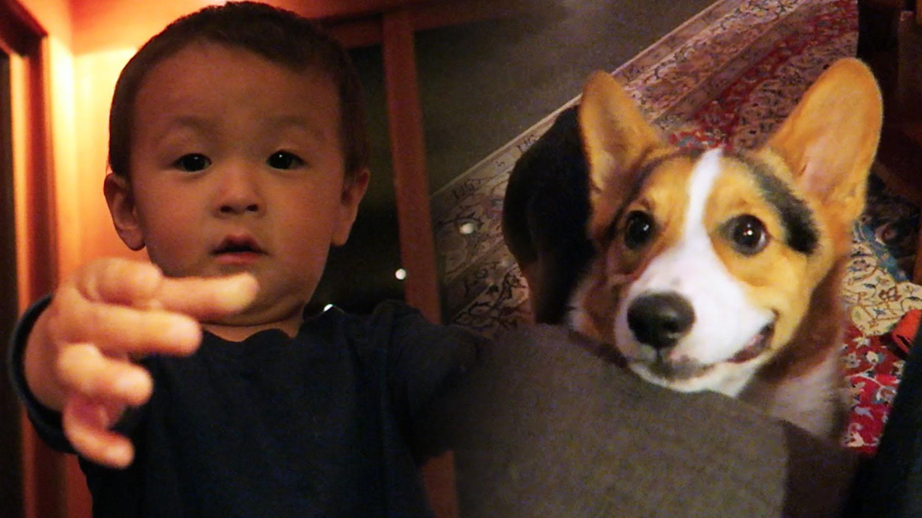 Corgi Meets Baby for First Time