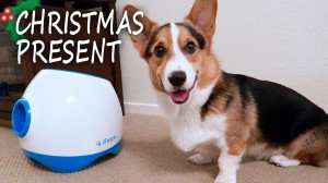 Corgi's Best Christmas Present iFetch Too