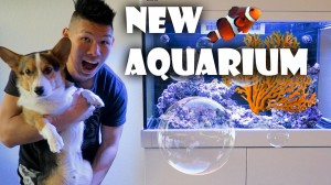 STARTING NEW SALTWATER REEF AQUARIUM | WHAT I LEARNED