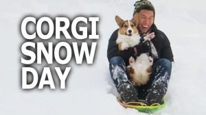 CORGI DOG SLEDS 1st TIME IN SNOW