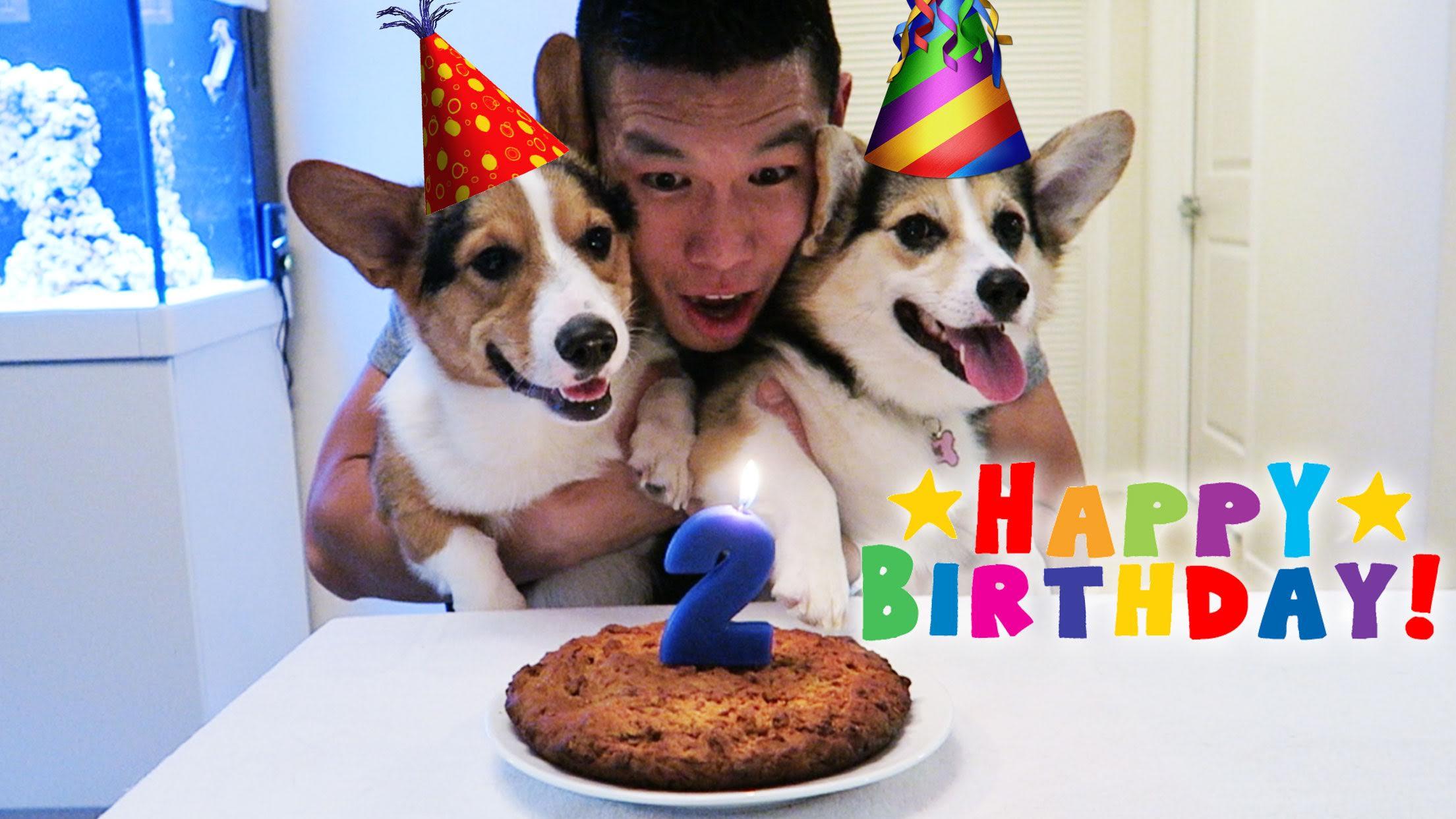 Corgi Birthday Party
