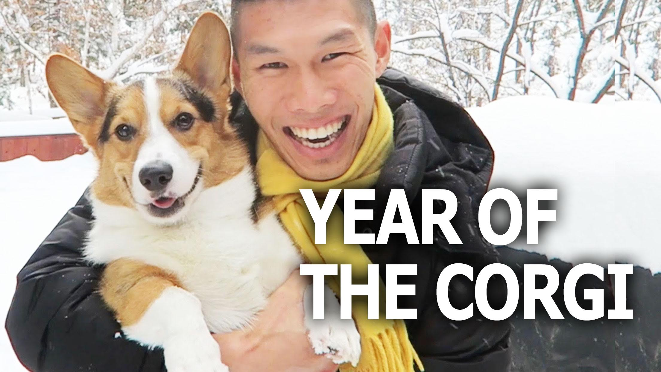 Year of the Corgi Dog