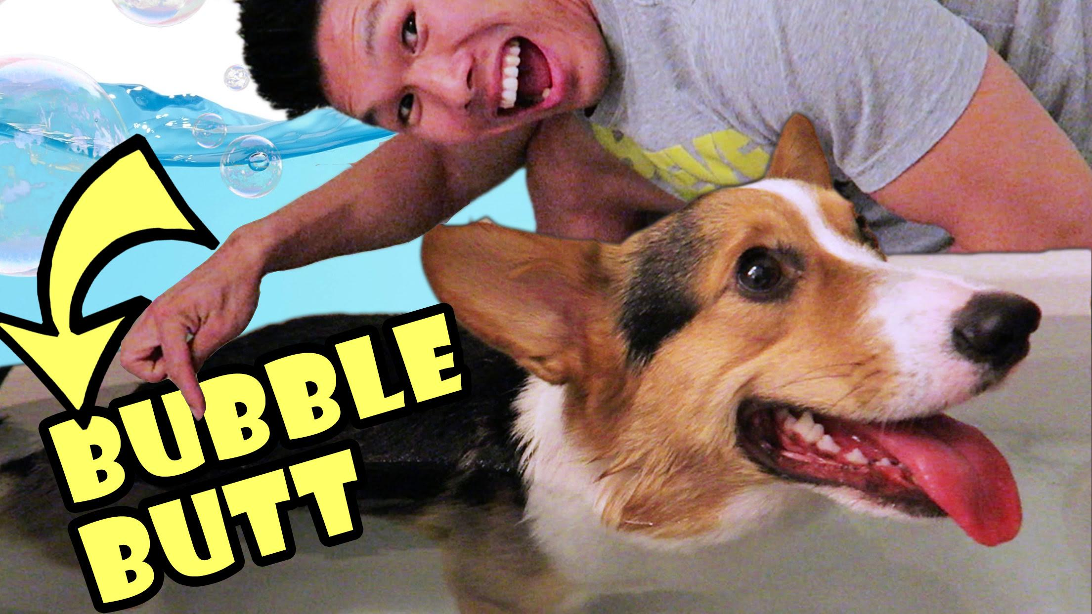 DO CORGI DOG BUTTS FLOAT?!