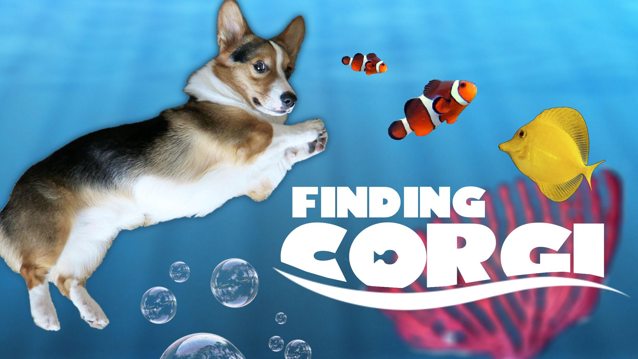 CORGI CARES FOR NEW FISH TANK FRIENDS