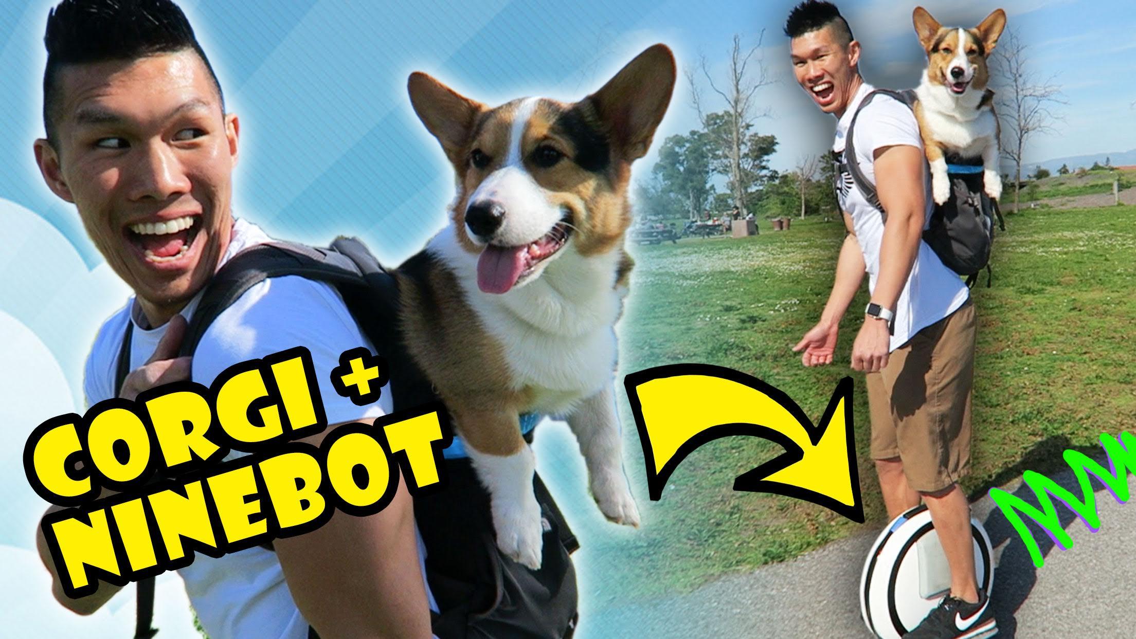 CORGI DOG IN BACKPACK RIDES NINEBOT HOVERBOARD