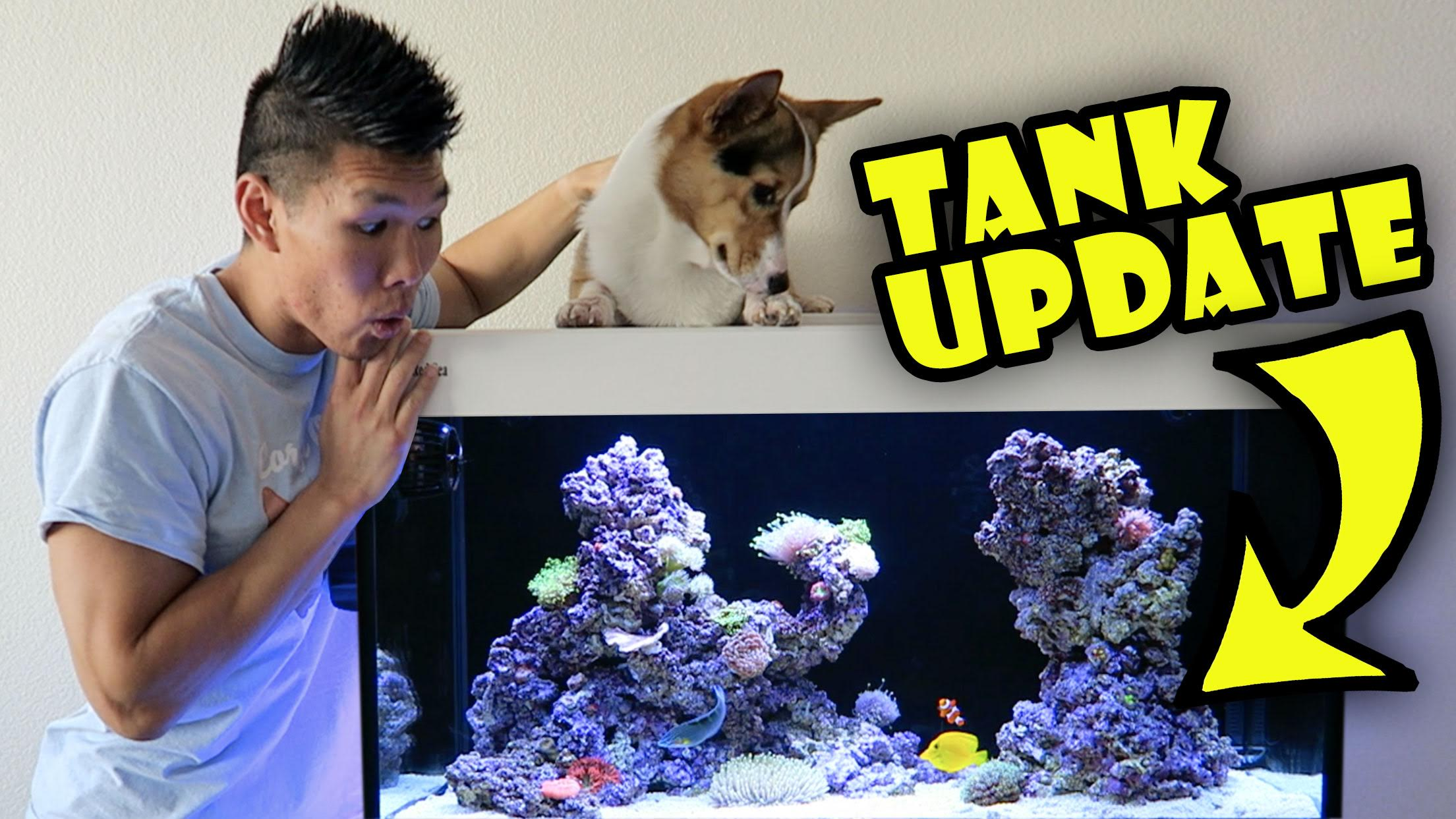 WHAT'S AN UNREAL FISH TANK SETUP LOOK LIKE?