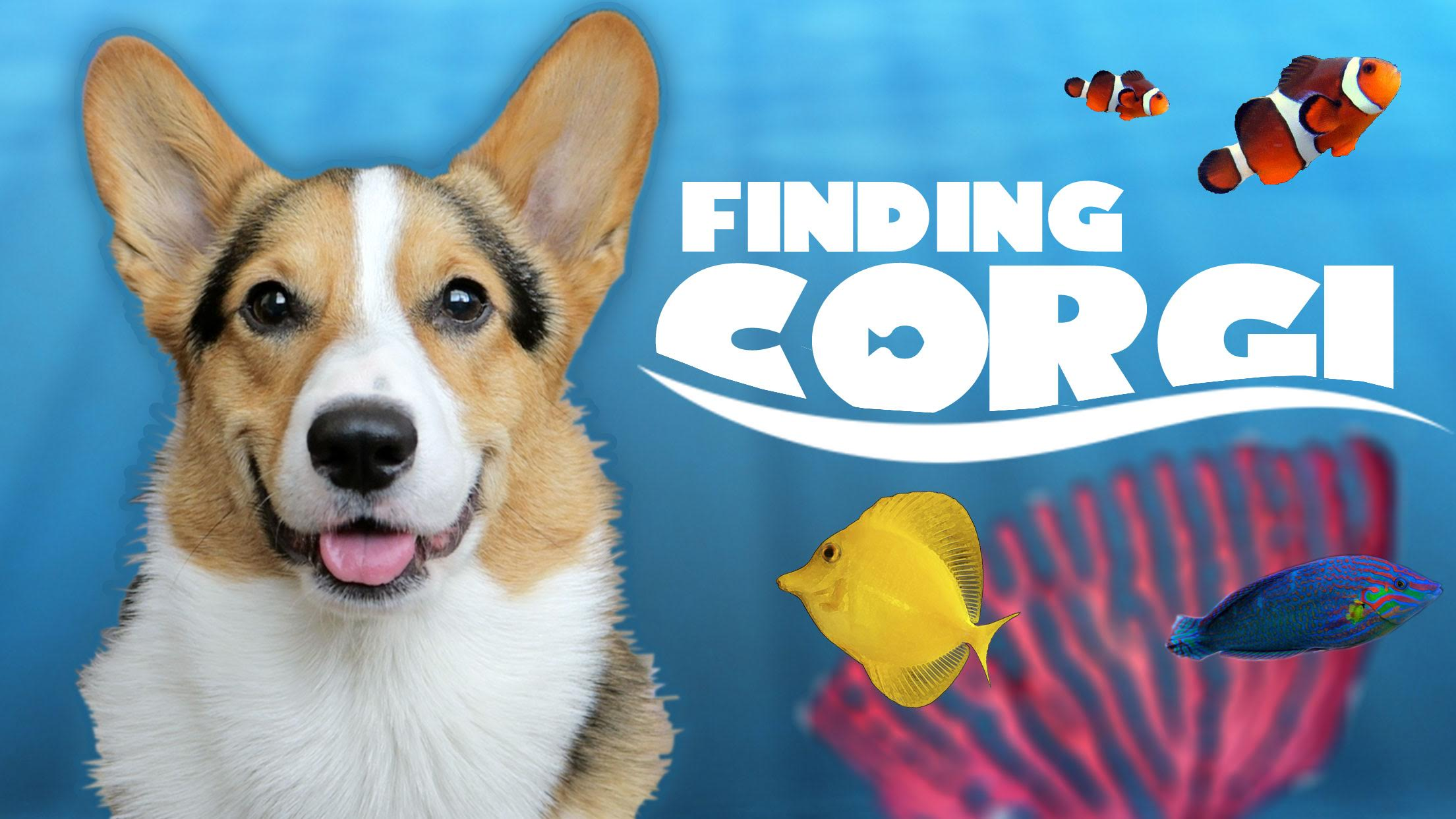 Fish aquarium jobs - Corgi Finds Final Fish Tank Friend Aquarium Complete Life After College Ep 488