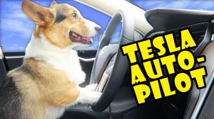 CORGI DRIVES New 2017 TESLA ON AUTO-PILOT???