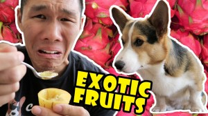 COMPARING EXOTIC FRUITS From Around the WORLD