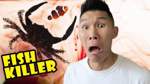 Fish Killer Crab Causes Aquarium Disaster