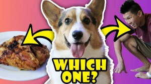 WILL MY DOG CHOOSE CHICKEN OVER ME?