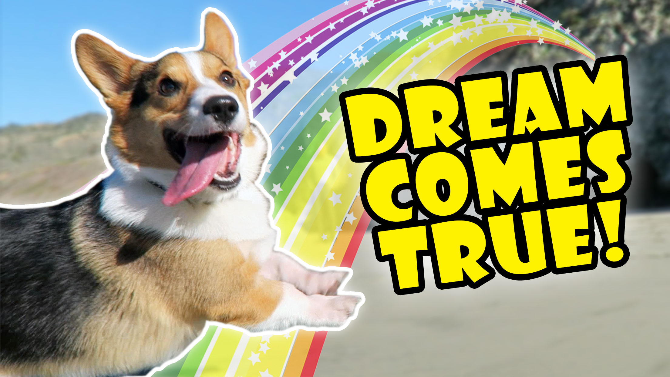 CORGIS DREAM COMES TRUE -- Best Day Ever!