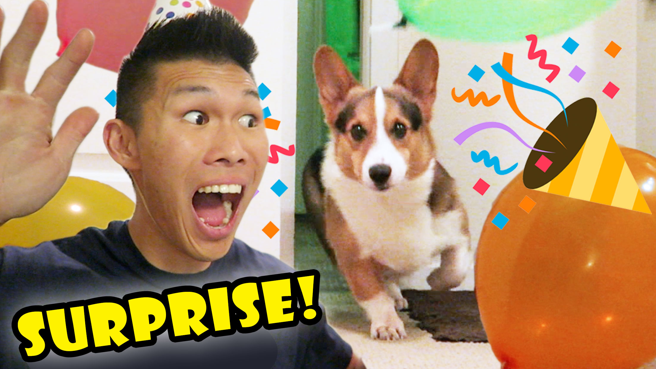 SURPRISING My CORGI Dog w/a BIRTHDAY PARTY