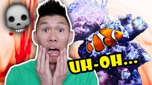 SURVIVORS & CASUALTIES: WHAT HAPPENED TO MY FISH TANK?