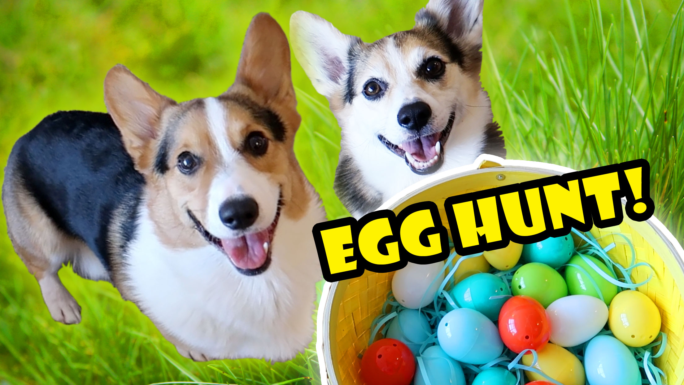 CORGIS SURPRISE EASTER EGG HUNT