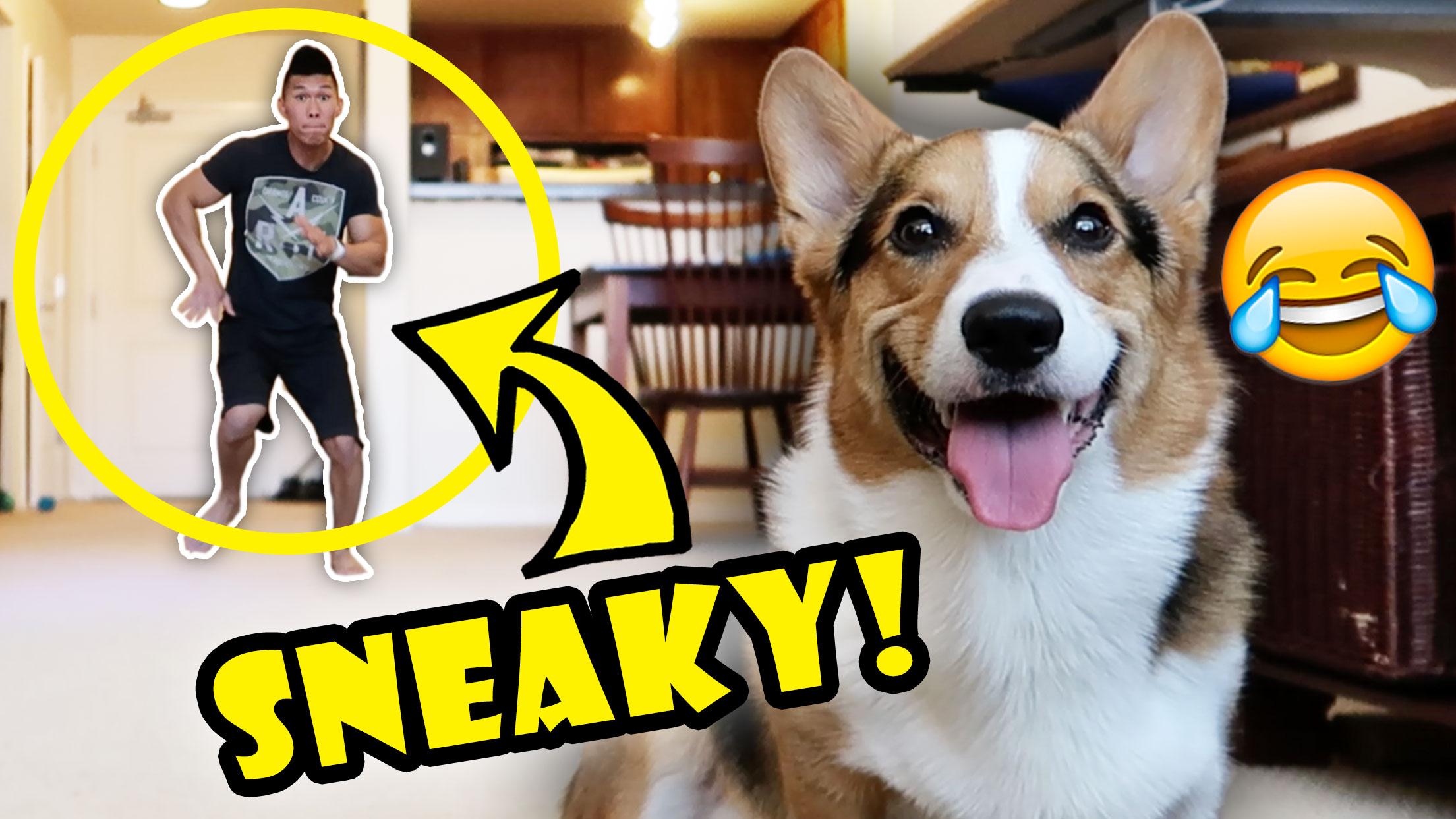 DANCING BEHIND CORGI DOG - WILL HE NOTICE?